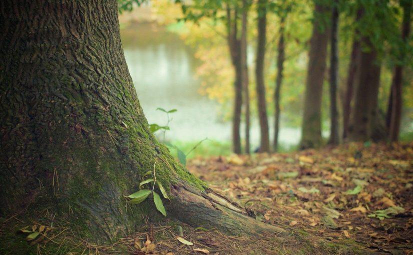 Piękny i {czysty zieleniec to nie lada wyzwanie, w szczególności jak jego konserwacją zajmujemy się sami.